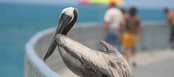 outdoor-living-brevard-bird