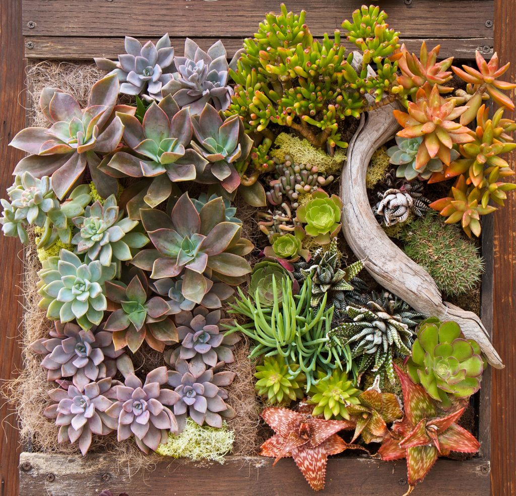 Succulent Pallet Wall Space Coast Living Magazine